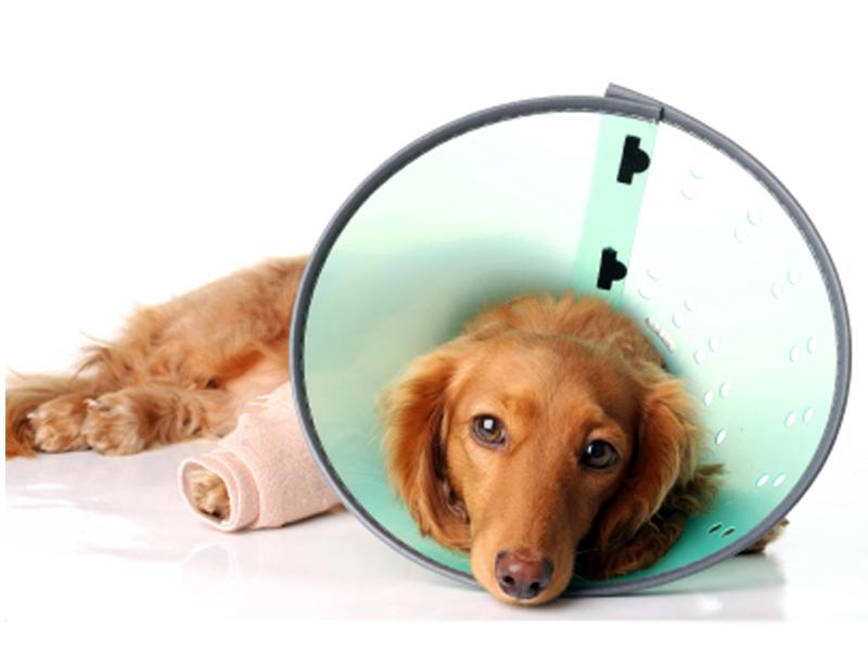 racine pet surgery, veterinary surgery racine, racine veterinary surgeons