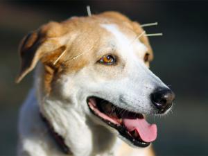 veterinarians Racine, pet acupuncture racine, best vet in racine