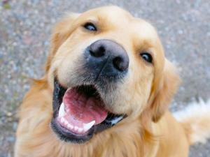 pet dentist racine, veterinary dentistry racine, racine dog dentist
