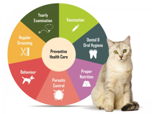 racine preventive vet care, preventive veterinary care racine, pet preventive care racine