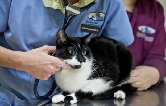 racine cat veterinarian, veterinarian for cats in racine, prairie side veterinary hospital