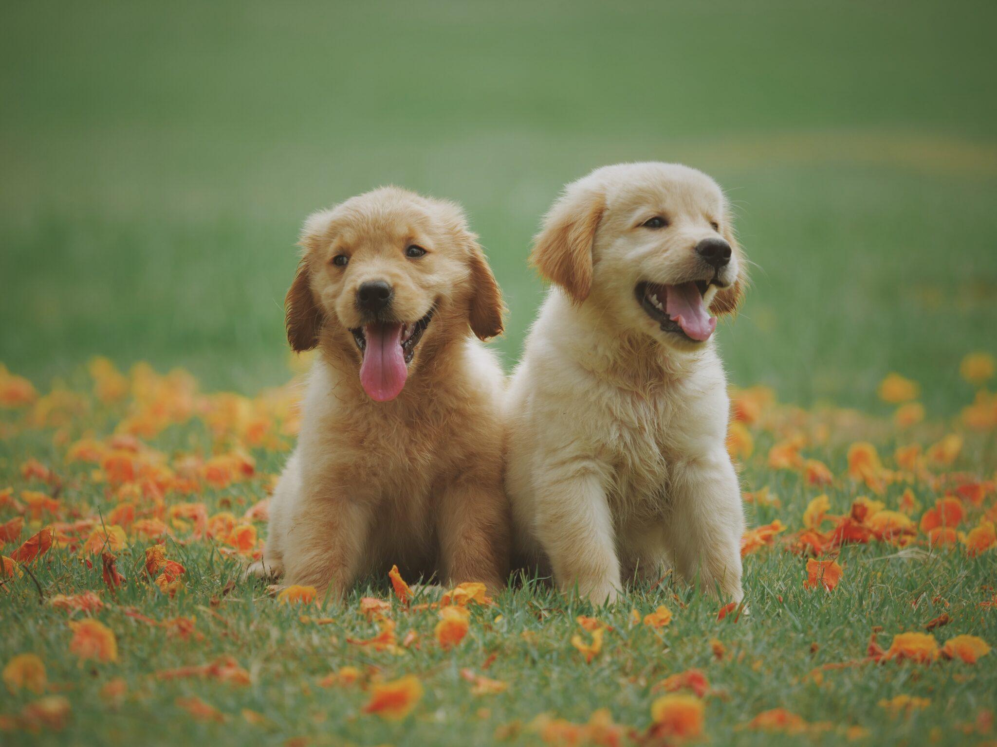 dog care in racine, racine dog care, dog veterinarian in racine